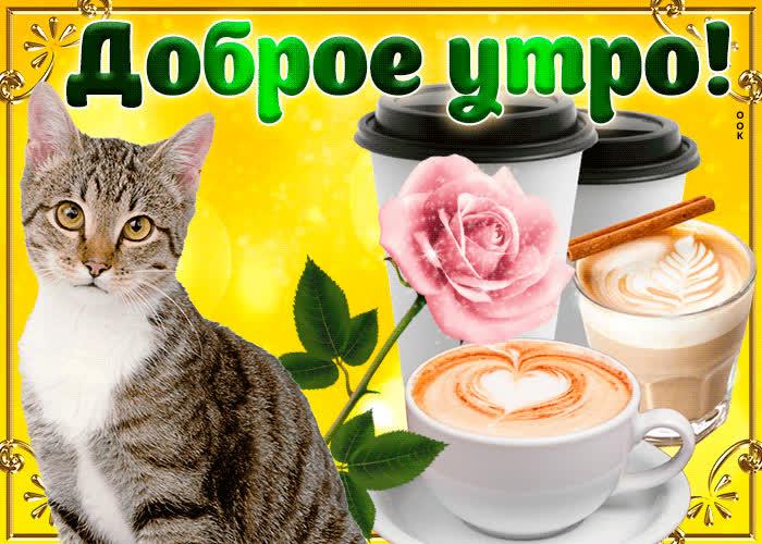 Открытки с добрым утром доченька с котятами, февраля прикольная