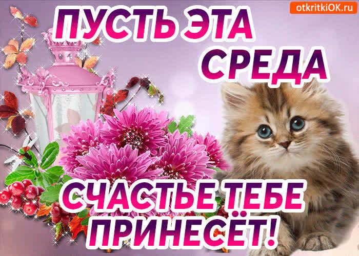 Картинки котах, счастливой среды открытки