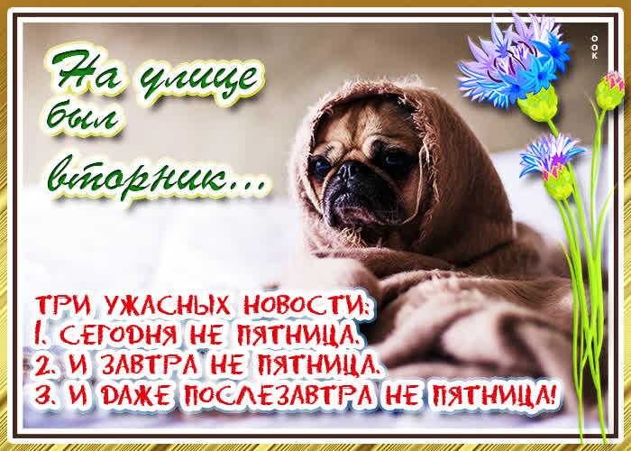 Картинка смешная открытка с вторником