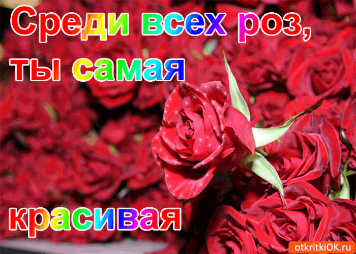 Картинка среди всех роз, ты самая красивая!