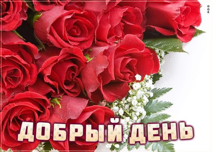 Открытка супер картинка добрый день с розами