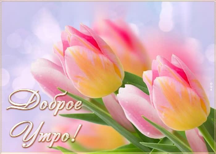 Открытка светлая картинка доброе утро с тюльпанами