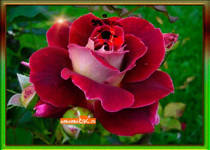 Картинка танец роз