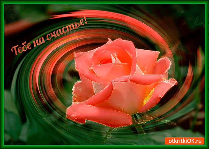 Картинка тебе на счастье эта роза