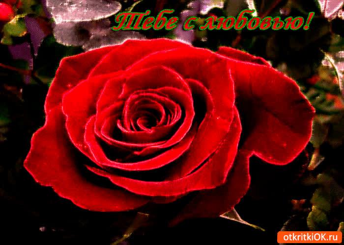 Картинка тебе с любовью красный цветочек