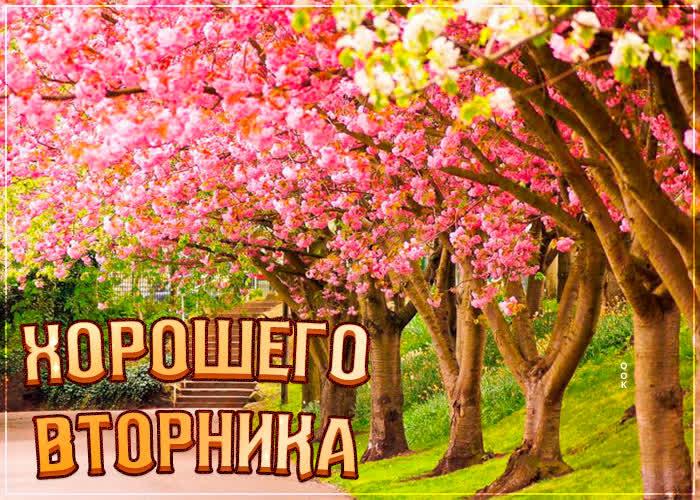 Открытка цветущая картинка с вторником