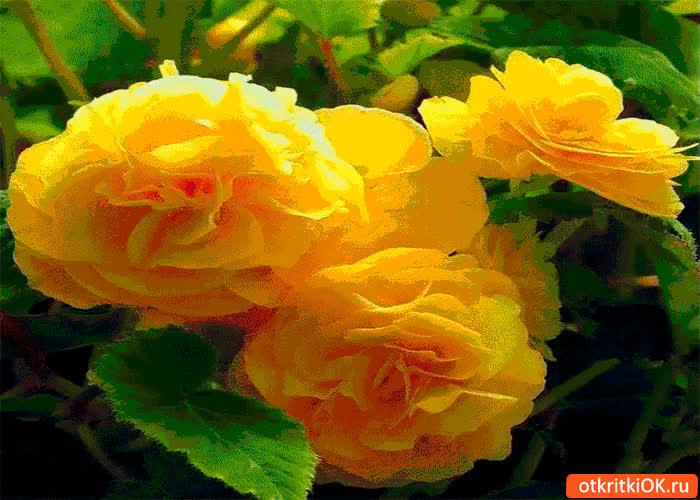Картинка удивительные розы для тебя