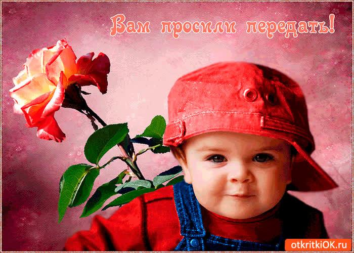 Картинка вам просили эту розу передать