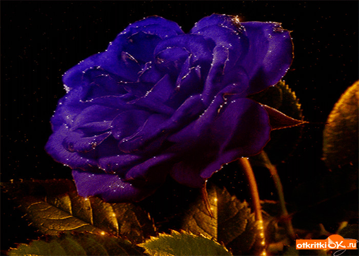 Картинка волшебная роза