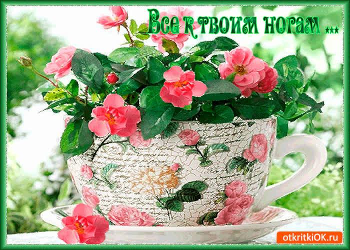 Картинки все розы мира к твоим ногам, картинки