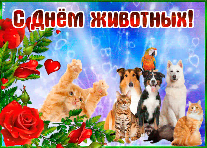 интересным поздравление с всемирный день животных помощью