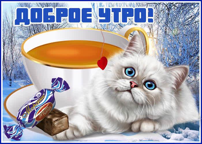 Картинка зимняя картинка доброе утро с котиком