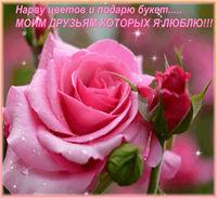 Картинка мини-открытка цветов