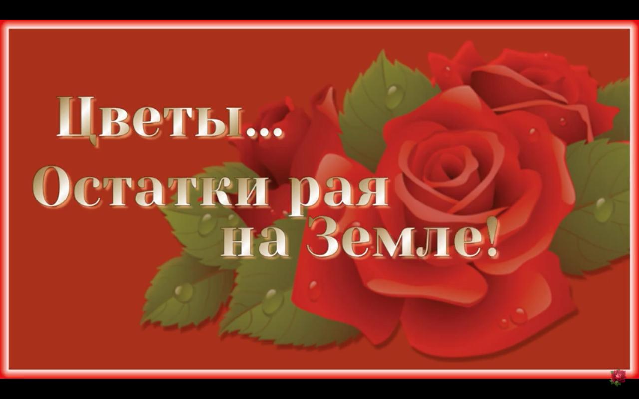 Открытка музыкальная открытка с цветами! музыка и розы. пожелания с цветами!