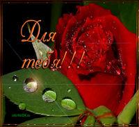 Картинка анимация красная роза для тебя
