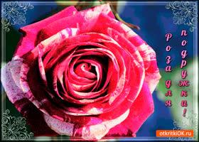Открытка большая роза для подружки