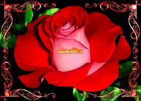 Открытка большая роза с пожеланиями любви