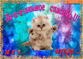 Картинка большое спасибо от котика