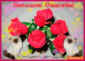 Открытка большое спасибо. держи букет роз
