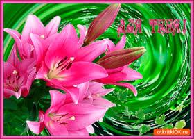Открытка букет красивых лилий для тебя