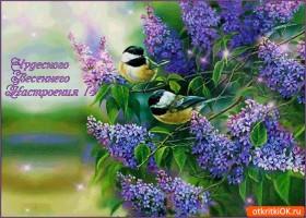 Картинка чудесного цветущего настроения