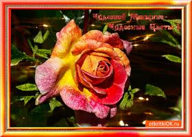 Открытка чудесной женщине дарю самые чудесные цветы