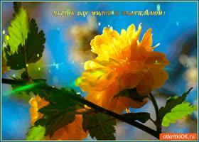 Открытка цветок для милой и обаятельной