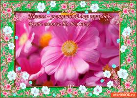 Картинка цветы - роскошный дар природы