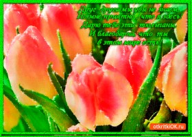Открытка дарю тебе эти тюльпаны