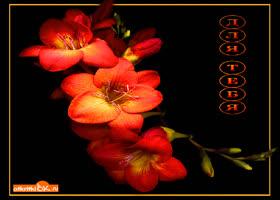 Картинка дарю цветы