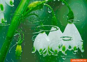 Картинка день подснежника в апреле