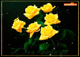 Открытка для тебя жёлтые розы