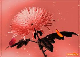 Картинка для тебя цветок и бабочки