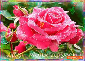 Картинка для моих друзей необыкновенная роза