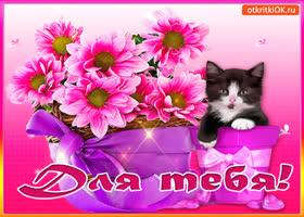 Картинка для тебя букет и котик