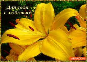 Открытка для тебя лилии с любовью