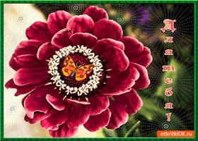 Открытка для тебя нежный цветок