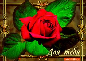 Открытка для тебя открытка с розой