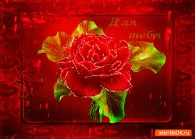 Картинка для тебя роза сверкающая