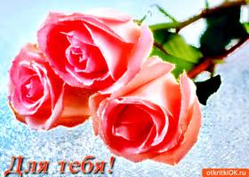 Картинка для тебя розовые розы