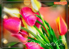Картинка для тебя свежие тюльпаны