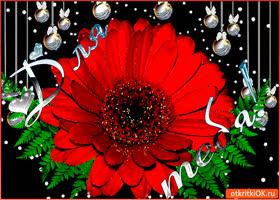 Картинка для тебя цветок шикарный
