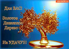 Открытка для вас денежное дерево