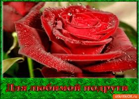 Картинка для любимой подруги любимый цветок
