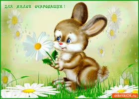 Открытка для милой очаровашки цветок