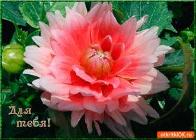 Открытка для тебя необычно-красивый цветок