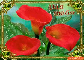 Открытка для тебя неповторимые цветы