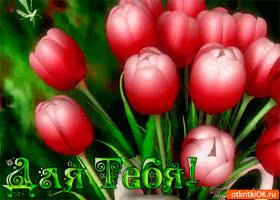 Картинка для тебя нежнейшие тюльпаны