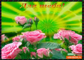Открытка для тебя нежные розы