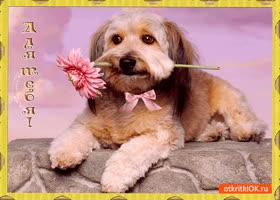 Открытка для тебя прекрасный цветок от меня